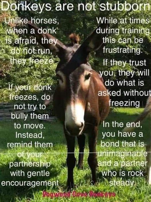 Donkeys are not stubborn!