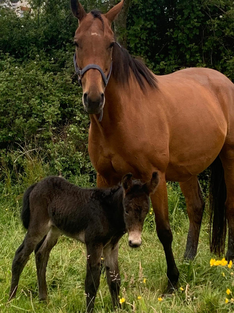 9th june 2020 Mule Foal