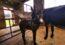 Kinedale Donkeys' Latest Arrivals