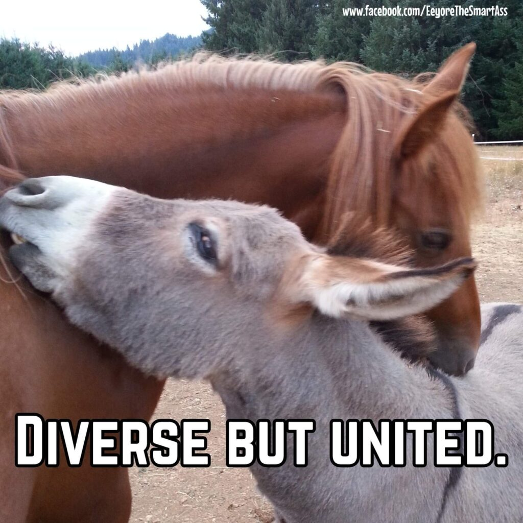 Diverse but united